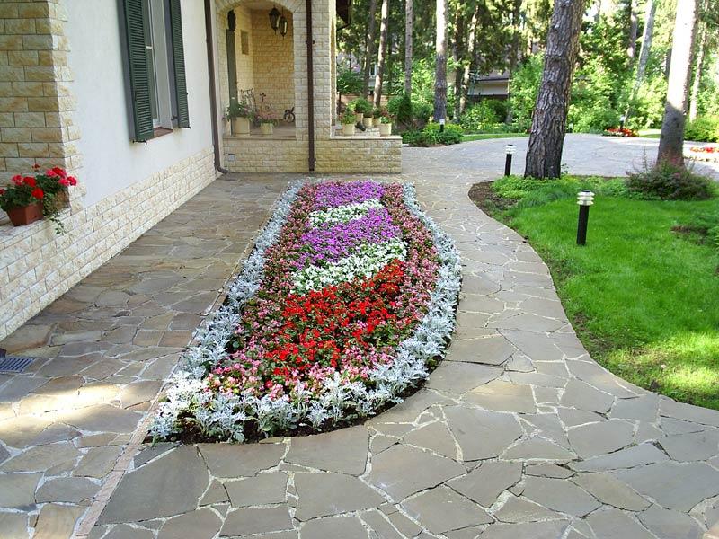 красиві квіти на ділянках