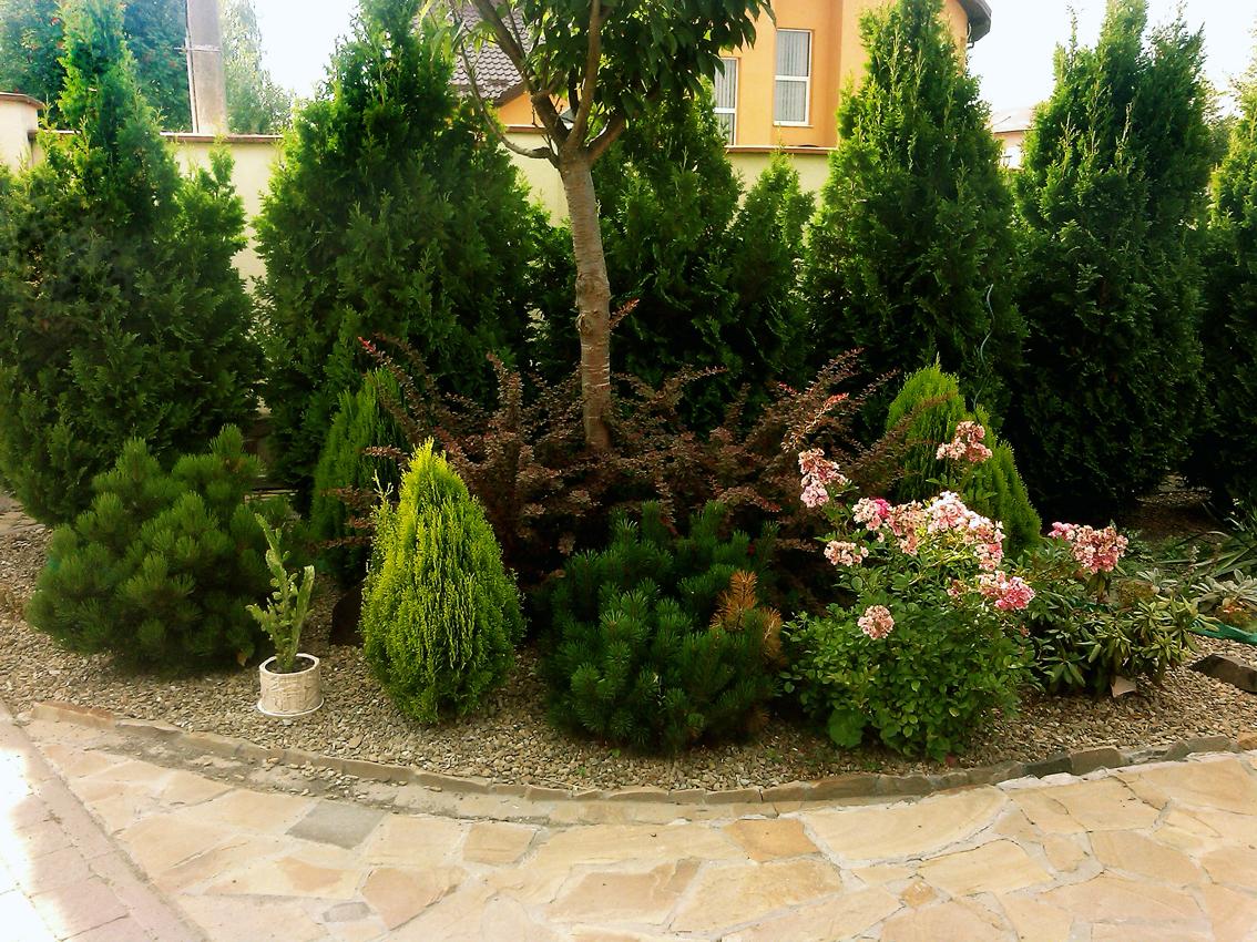 посадка дерев та рослин