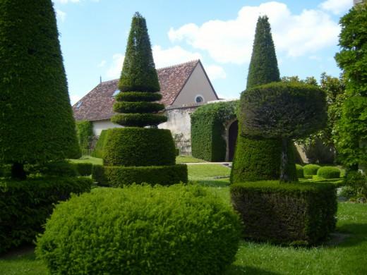 топіар у саду