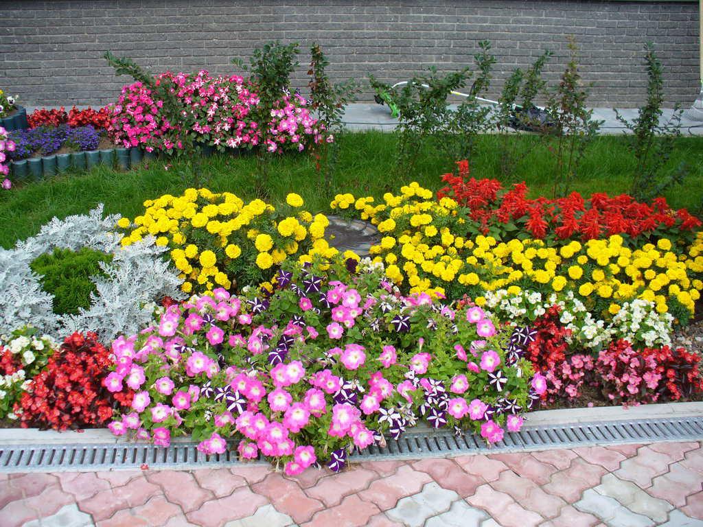 Цветы однолетние клумба