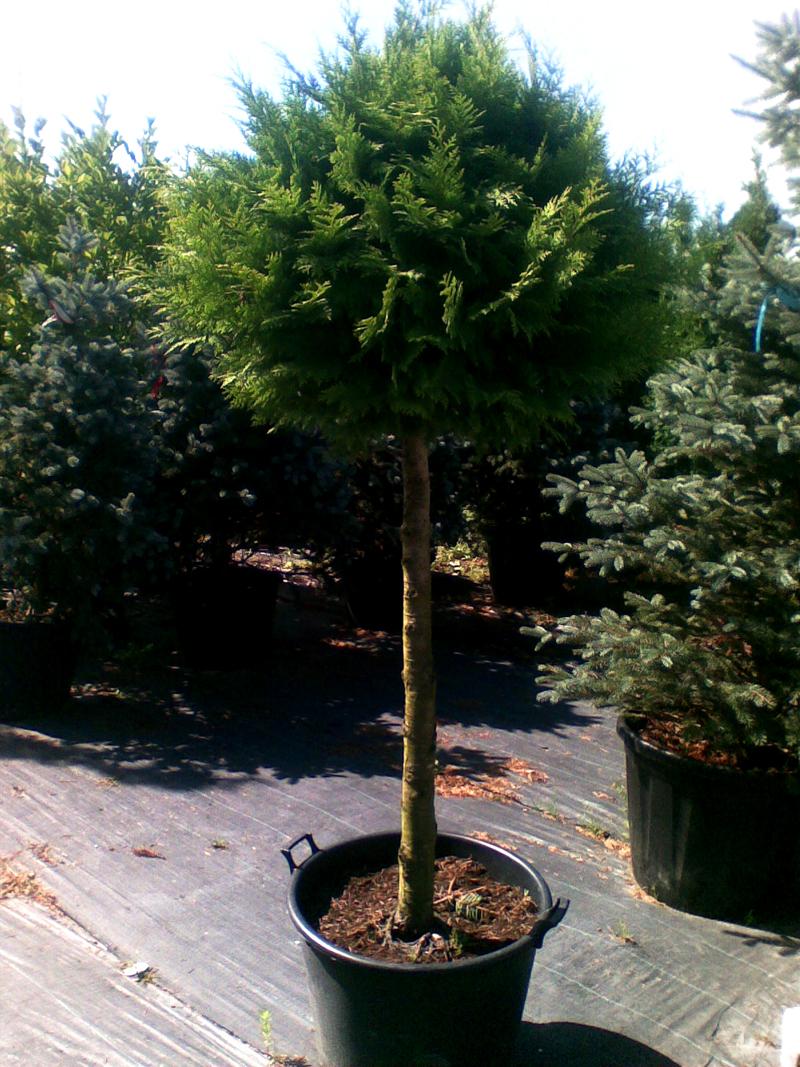 посадка дерев у Львові